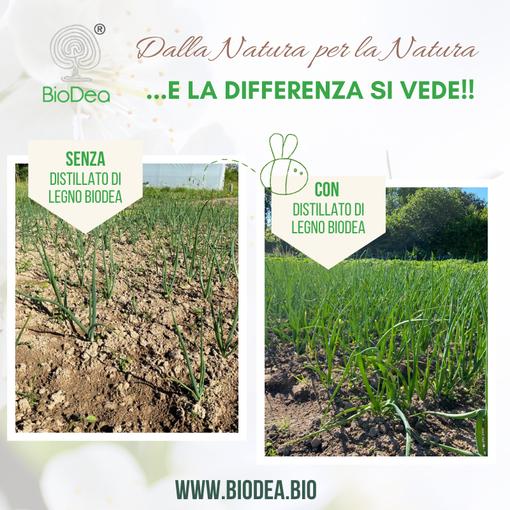 """Orto: trattamento del terreno con """"Biochar BioDea"""" e """"Distillato di Legno BioDea"""""""