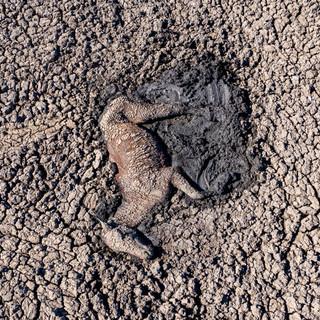 La Terra non si sta riscaldando: sta bruciando.