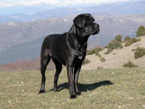 Torna l'Estate ed aumentano nuovamente le aggressioni dei cani ai danni dei proprietari, spesso sono bambini