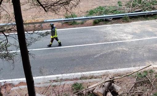 Forte vento in tutta la Valle; riaperta la strada per Cogne chiusa ieri sera per caduta alberi