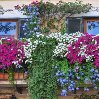 Courmayeur: Balconi fioriti, giardini curati, dehors invitanti per far dimenticare il coronavirus