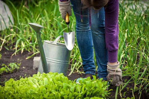 Dal 4 maggio nuove disposizioni per distanze fisiche lavoratori agricoli