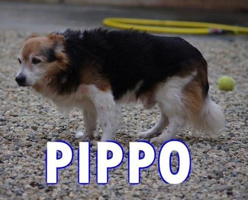 Un focolare amorevole per Pippo