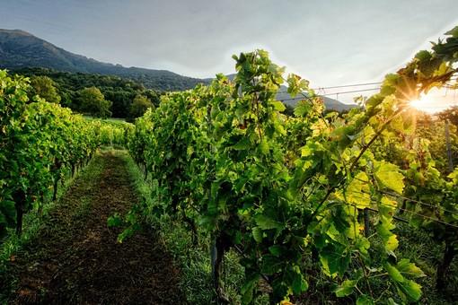Promozione sui mercati dei Paesi Terzi', al via presentazione progetti vitivinicoli 2020/2021.