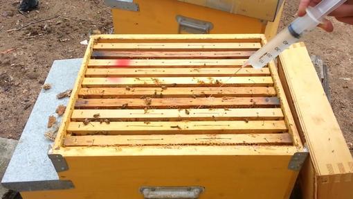 Trattamenti in fioritura per la salvaguardia delle api