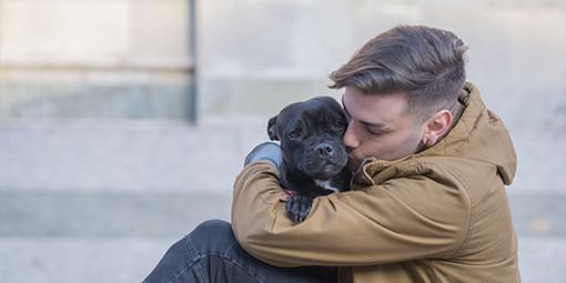 Come rintracciare il proprietario di un cane smarrito