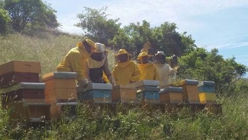 approvate le azioni prioritarie per  l'incremento dell'apicoltura