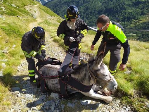 Tre asini cadono nel torrente Artanavaz, uno è salvato dai Vigili del fuoco