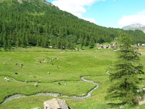 In Valle 20 alpeggi condotti da allevatori di altre regioni