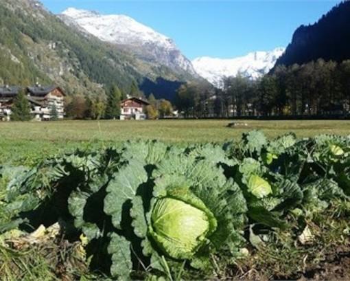 Approvati criteri per contributi imprese agricole e a sostegno del commercio dei prodotti agroalimentari
