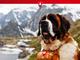 La traditionnelle désalpe de chiens Saint-Bernard aura lieu le samedi 28 septembre 2019