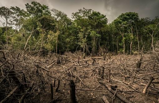 © Luis Barreto - WWF