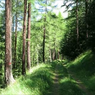 Riaperto il bando per gli interventi a sostegno del settore forestale