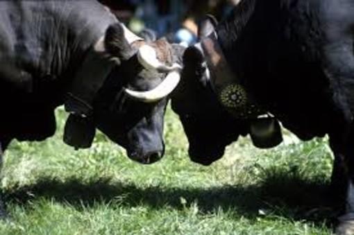 Valtournenche ospita l'Antica fiera del Bestiame
