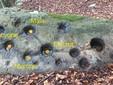 Stelle delle Pleiadi corrispondenti alle coppelle