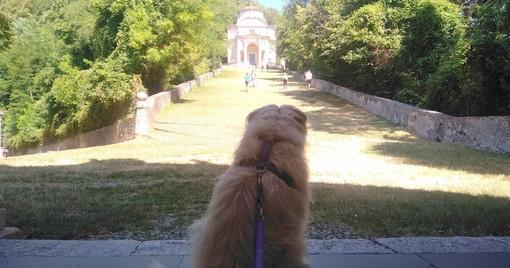 Camminate, parchi, spiagge: la Varese a misura di… cane