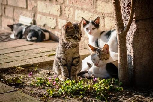 Cercasi veterinari per controllo colonie feline
