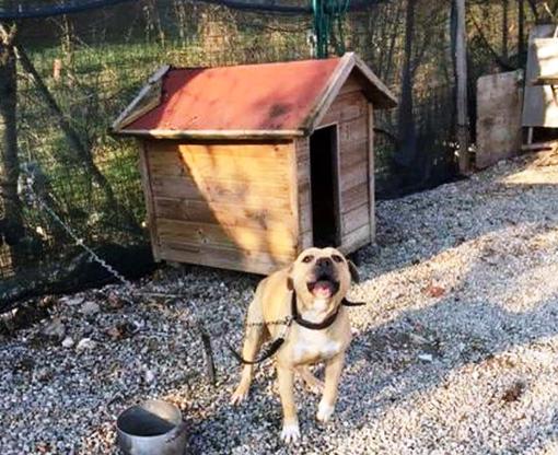 Aidaa ai sindaci 'Ordinanze rigide e pesanti sanzioni contro cani a catena e sui balconi'
