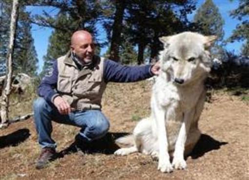 Il problema dei lupi, non si risolve con i fucili ma con una corretta formazione dei pastori e dei malgari!