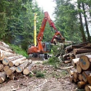 Al via assunzioni operai forestali scavatoristi