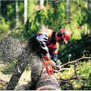 Giunta approva nuova Disciplina dell'Albo imprese e operatori-istruttori forestali