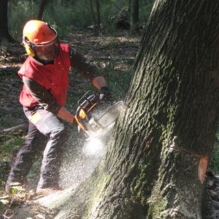 Al via progetto 'For.Italy' per gestione forestazione