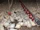 """Etichette benessere animale, CIWF e Legambiente: """"Ecco perché possono essere ingannevoli""""."""