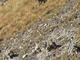 Adu e Mouv', 'agli agricoltori niente superamento del de minimis per danni da lupi'