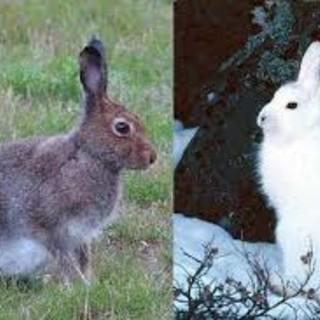 Legambiente, no a legge Piemonte per apertura alla caccia a 15 nuove specie