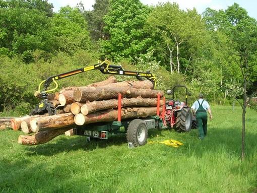 Programma di sviluppo rurale: riaperto il bando  per gli interventi a sostegno del settore forestale