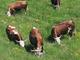 Per il Piano sviluppo rurale oltre 8 mln di euro