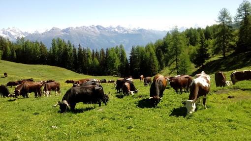 Nuovo programma bonifica bestiame