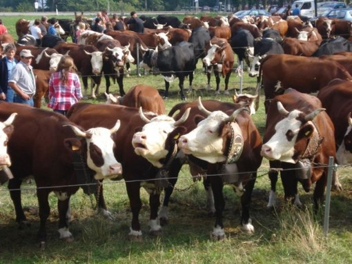 Programma di sviluppo rurale:  al via le domande per il sostegno alla promozione dei prodotti agricoli