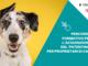 """Iniziata, con il record di partecipanti, l'edizione 2021 del corso """"Patentino"""" cani"""
