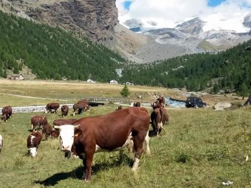 Programma di sviluppo rurale: riapre il bando per l'adesione  ai regimi di qualità dei prodotti agricoli