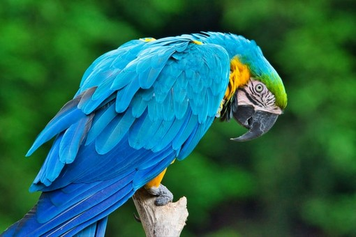 Volare è una necessità fisica e psicologica di ogni uccello
