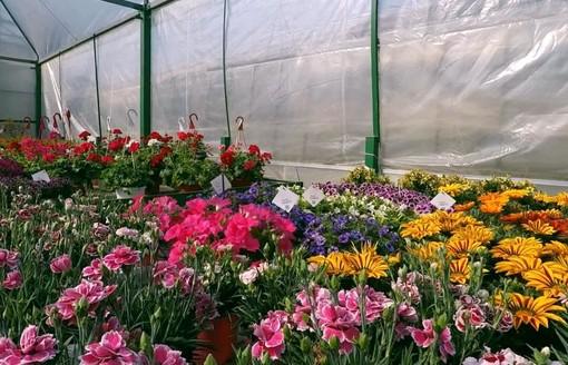 Allentamento stretta per esercizi vendita dettaglio piante orto frutto fioriagricole
