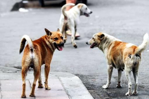 Prevenzione del randagismo e protezione degli animali da affezione sul territorio regionale
