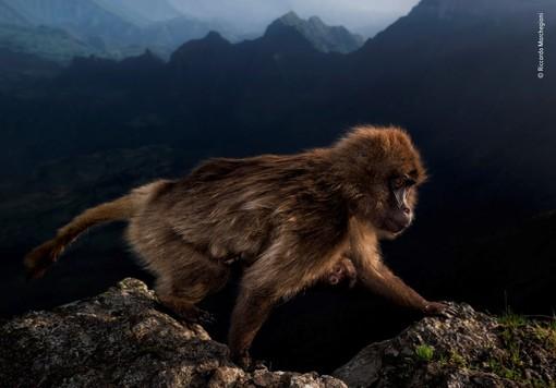 Foto di Riccardo Marchegiani per Wildlife Photographer of the Year