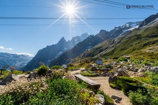 I fiori del Monte Bianco ci attendono dal 26 giugno 2021