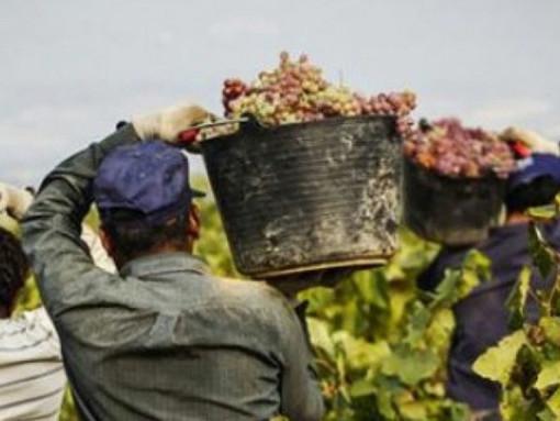 Coldiretti, 'riapertura frontiere salva gran parte del raccolto'