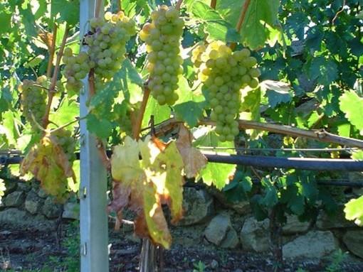 Sei etichette valdostane tra i migliori vini del Nordovest per Gambero Rosso
