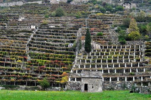 Inaugurée la Route des vignobles alpins