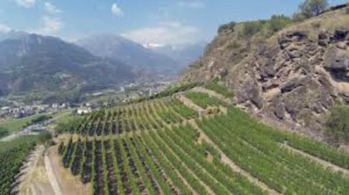 Vendemmia abbondante e di qualità in Valle d'Aosta